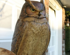 carving-bird-owl - wood carving