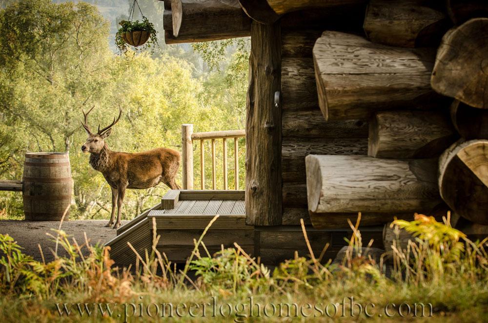 Eagle brae highland custom built log homes pioneer log for Eagles ridge log cabin