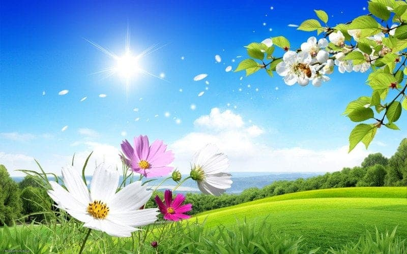 spring_image